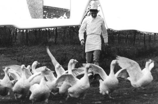1987 Michael and the geese